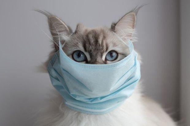 Ev heyvanlarında koronavirusun əlamətləri açıqlandı