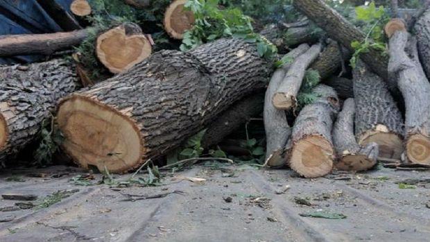 Bakıda ağac kəsintisi ilə bağlı şikayət: Araşdırma aparıldı