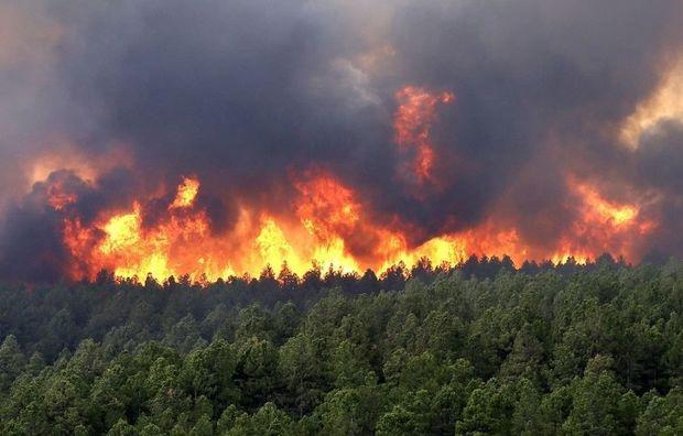 Ombudsmandan Şuşada meşələrin ağ fosforla yandırılması ilə bağlı HƏYƏCAN TƏBİLİ